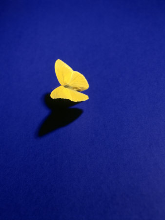 This is one of my faves...and I can incorporate it pretty well into Twitter\'s theme format... :: \'Lone Butterfly\' by Brian Lang