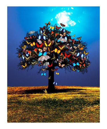\'Butterfly Tree\' by David Rickerd
